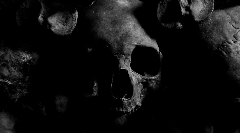 skull photo from pexels.com