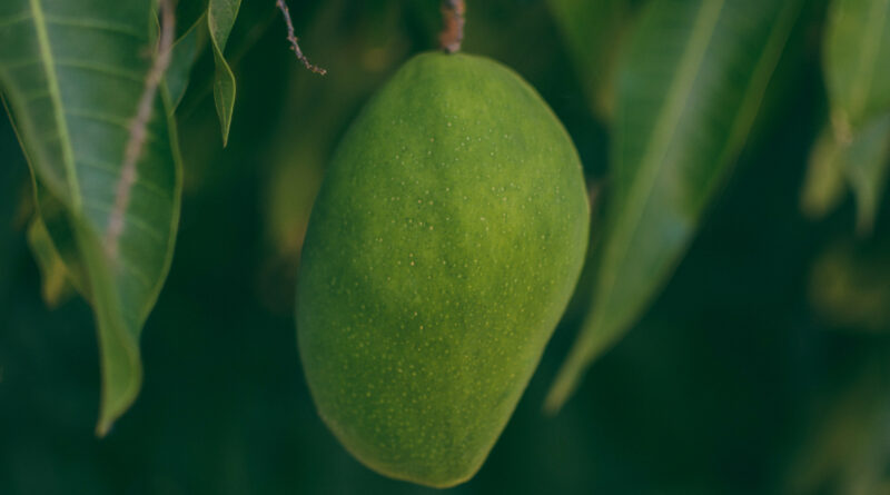Mango photo from pexels.com