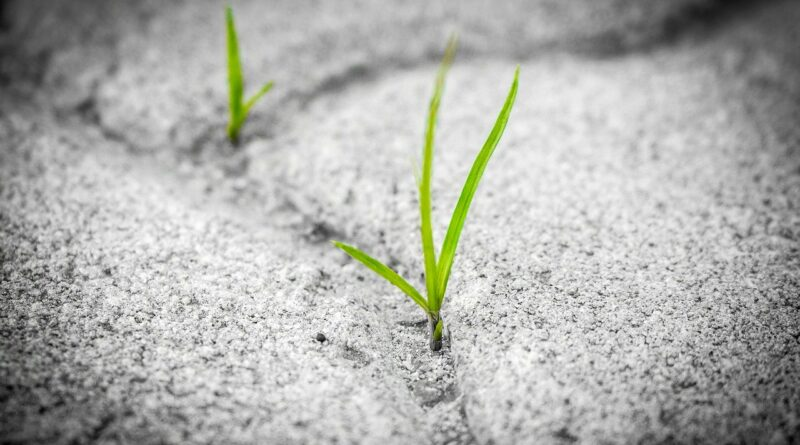 image of resolute grass growing through concrete from pixabay.com