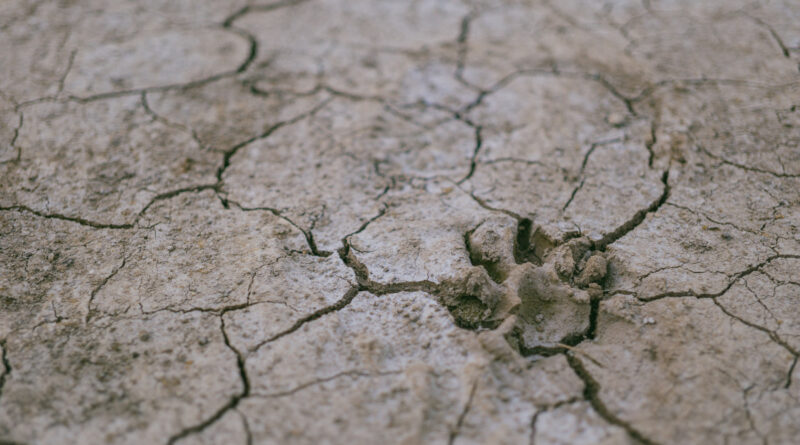 picture of 'cracked' ground from pexels.com